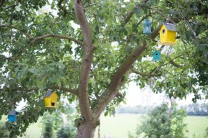 Small yellow and blue bird houses in a tree.